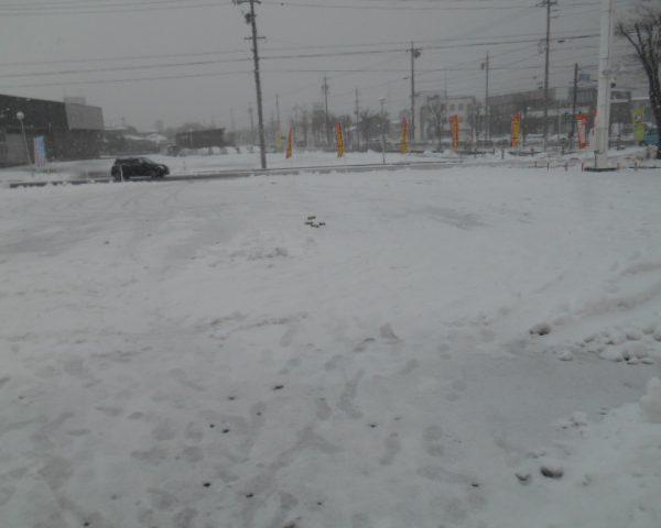 またまた 雪です