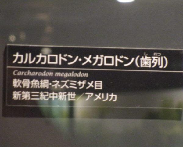 アップガレージ長野店で~す!