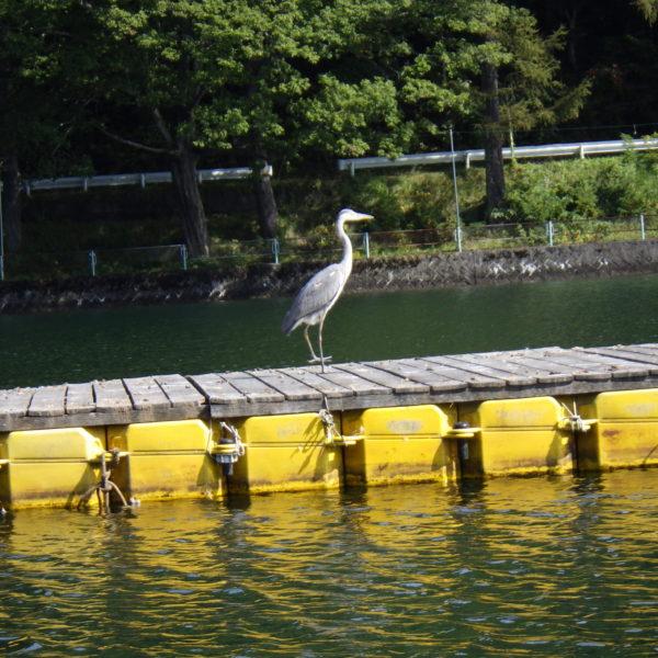 またまた行ってきました(^u^) 釣りブログ!!